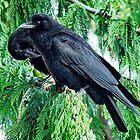 The Raven by AnnDixon