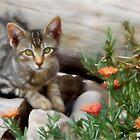 Kitten in watercolour by missmoneypenny