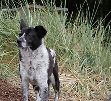 Noble Old Heeler (R.I.P. Ba'al 1996 - 2010) by Edward A. Lentz