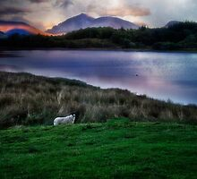 Sheep at sunset  by Kathy Weaver