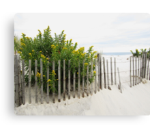 Seaside Gold Canvas Print
