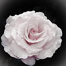 Soft pink. by Jeanette Varcoe.