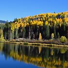 Aspen Reflections by lorilee