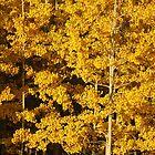 Yellow autumn by zumi