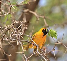 Golden Weaver - African Peace Symbol by LivingWild
