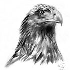 Eagle Portrait by Mui-Ling Teh