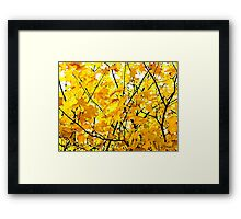 GOLDEN AUTUMN SUNSHINE Framed Print