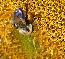 Busy bee by Mindseyephotos