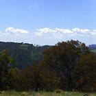 Panoramic Views from the Pinnacle Fire Trail, NSW by Deborah McGrath