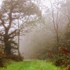Woodlands walk by Southernlass