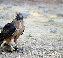 Red Tailed Hawk Catch by Henrik Lehnerer