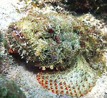 Scorpion Fish by Amy McDaniel