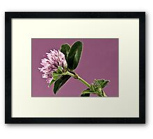 Wild Clover Blossom - Macro  Framed Print