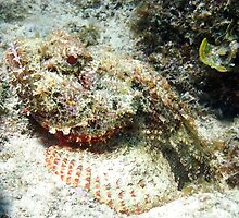 Scorpion Fish in the Sand by Amy McDaniel
