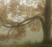 reach the fog by dc witmer