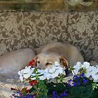 Dixie's couch on the front porch by Rainydayphotos