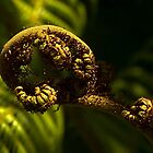 Koru - birth of a new fern.......! by Roy  Massicks