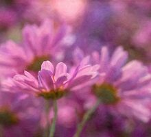 Pink mums for autumn by Celeste Mookherjee