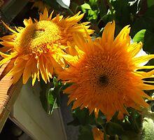 sunflowers by Maureen Zaharie