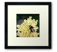 How to Bee Happy Framed Print