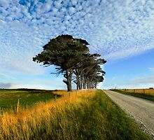 Country Road by Angelika  Vogel