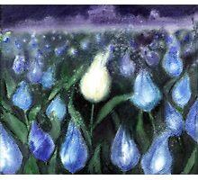 White Tulips Watercolor  Photographic Print