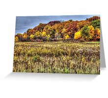 Fall Colors I Greeting Card