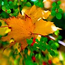 Autumn Leaves by Kasia-D