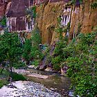 Zion National Park/ Virgin River by Nancy Richard