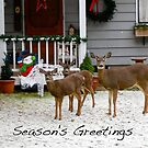 Deer Season's Greetings  by RichImage