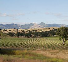 California vineyard by LisaRent