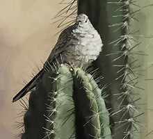 Cactus Dove by Jeff Powers Illustration