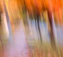 Fall Canopy by Thomas Young