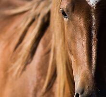 Onaqui Wild - Utah 2015 by Kelly Jay