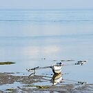 Calm Sea by Werner Padarin