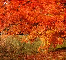 Rust Tree In Autumn by Ginger  Barritt