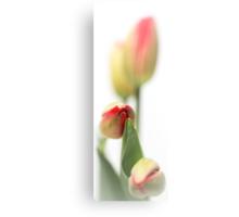 Fresh Tulips... (vertical) Canvas Print