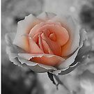Heart Of  A Rose by Christine Lake