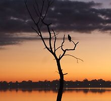 Solitary Eagle, Canning River, Perth by deepestdeepblue