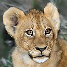 A cub of the Xiumungwe pride (i know how cute i am !) by jozi1