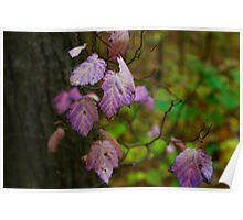 Lilac Leaves Poster