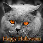 Arnold The Cat - Happy Halloween by fantasytripp