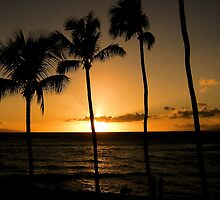 Tropical Sunset by Lori Peters