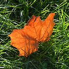 Backlit Autumn Leaf by MidnightMelody