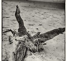 Roots by Paul Amyes
