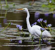 Amongst The Lillies by byronbackyard