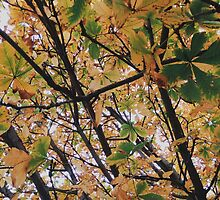 Leaves Turning Yellow by lolohannah