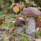 Cep Boletes by relayer51