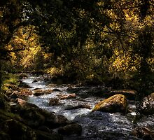 River Dart by Michael Carter