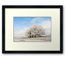 Frosted Copse Framed Print